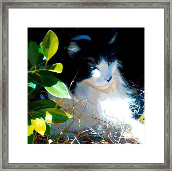 Kitty Hideaway Framed Print
