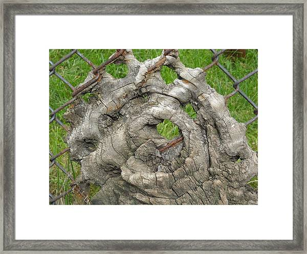 Knot In Fence 1 Framed Print