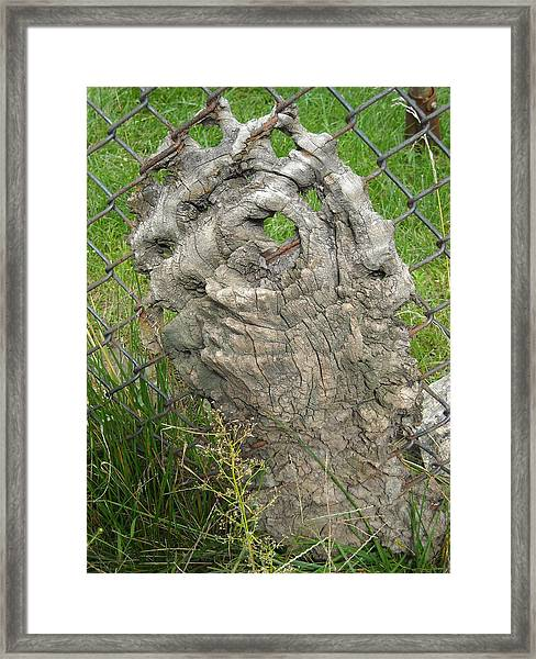 Knot In Fence 2 Framed Print