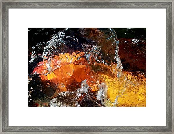 Koi Oasis Framed Print