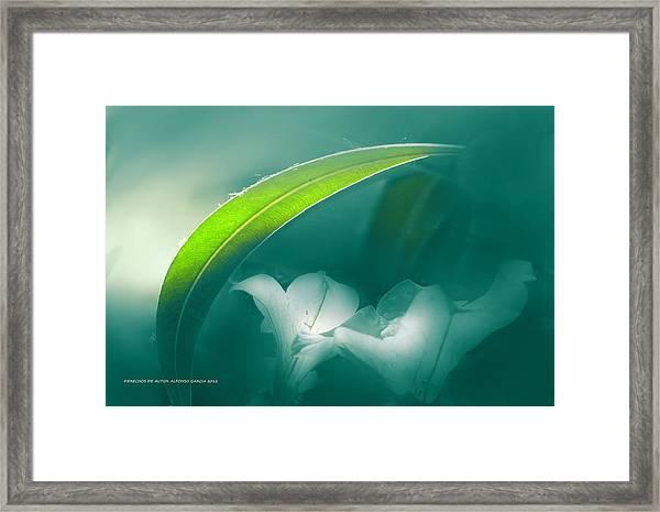 La Sombrilla Framed Print