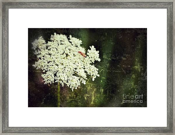 Lacy Anne Framed Print
