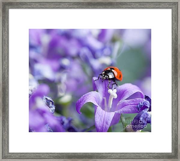 Ladybug And Bellflowers Framed Print