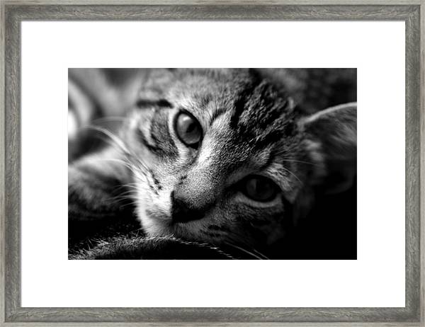 Lazy Days Framed Print