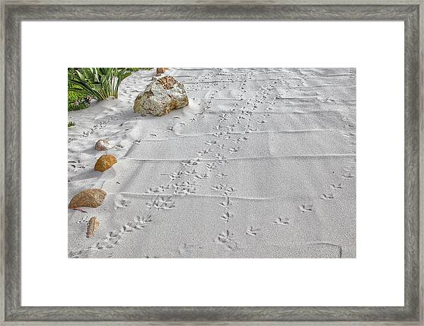 Leave Nothing But Your Footprints Framed Print