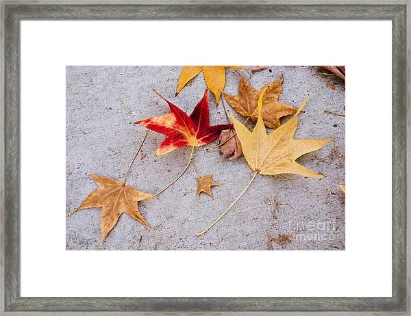 Leaves On The Sidewalk Framed Print