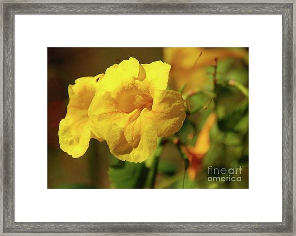 Lemony Yellow Framed Print