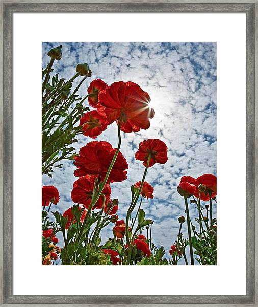 Let The Sun Shine In Framed Print by Donna Pagakis