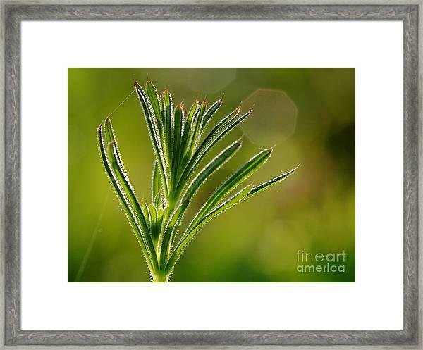 Light Leaf Framed Print