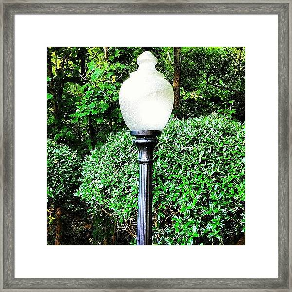 Lightpole Forest Framed Print
