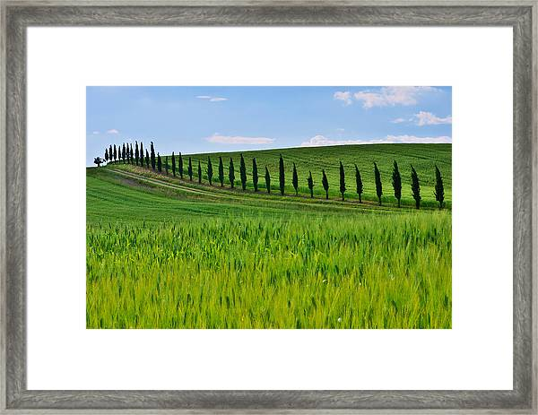 Lined Up Framed Print