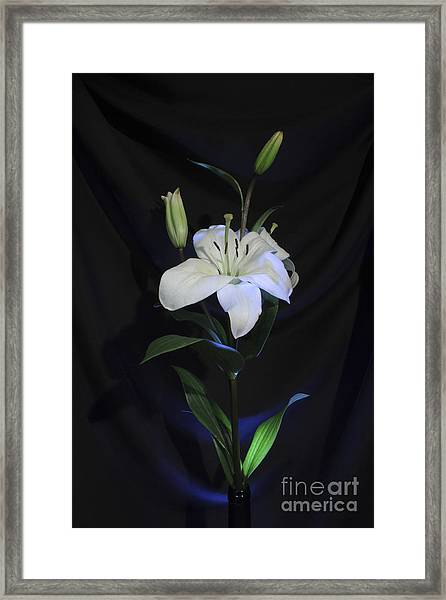 Lit Lily Framed Print