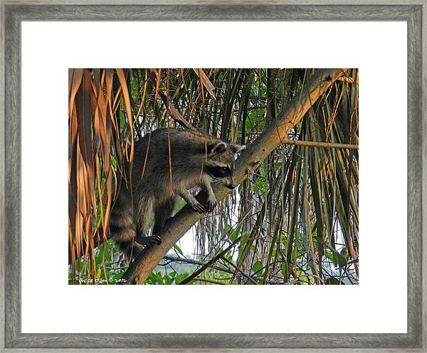 Little Bandit Framed Print