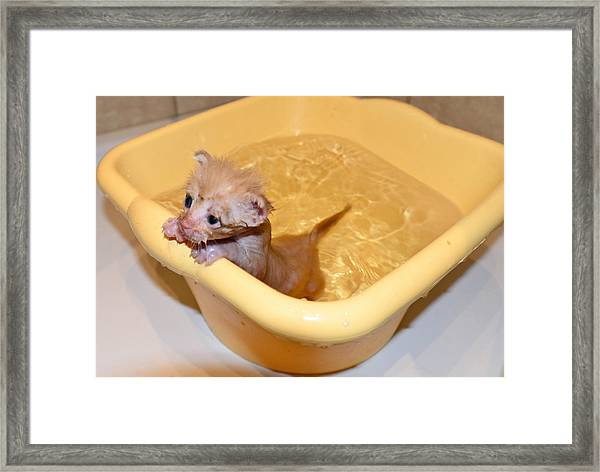 Little Bath Framed Print