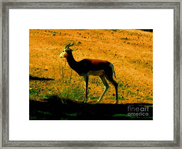 Little Deer Framed Print