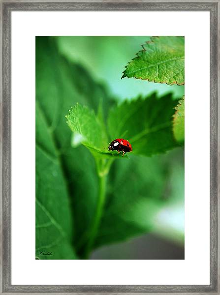 Little Red Lady Framed Print