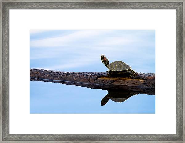 Log Roll Framed Print