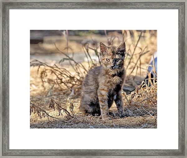 Lone Feral Kitten Framed Print