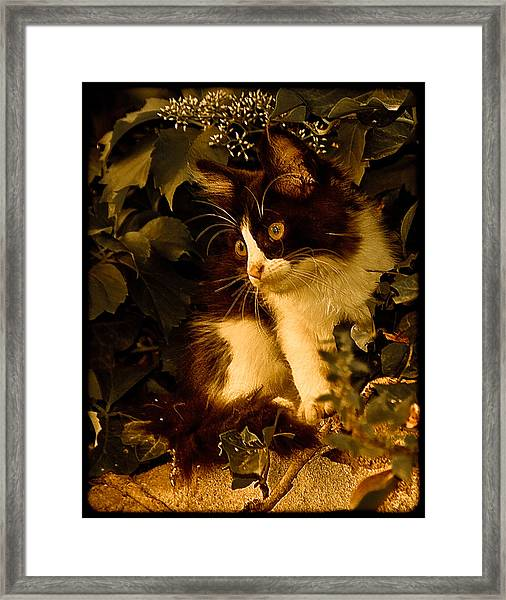 Athens, Greece - Lone Kitten Framed Print
