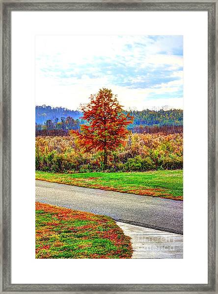 Lonely Tree 2 In Otto Armleder Park Framed Print