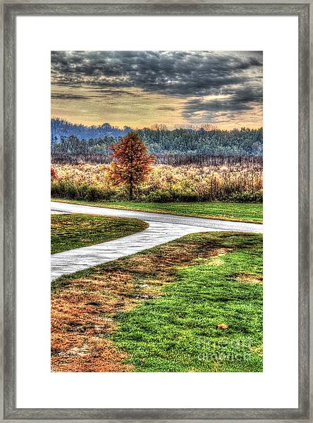 Lonely Tree In Otto Armleder Park Framed Print