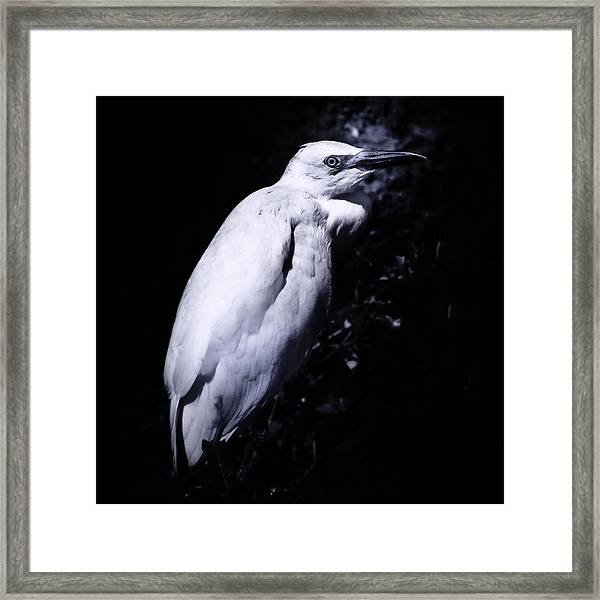 Lonesome Egret Framed Print