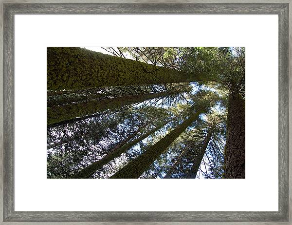 Framed Print featuring the digital art Look Up And Dream by Visual Artist Frank Bonilla