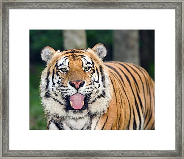 Looking At Lunch Framed Print