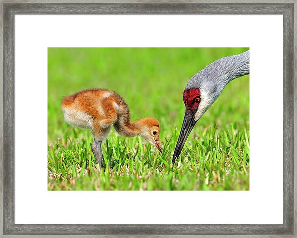 Looking For Bugs Framed Print