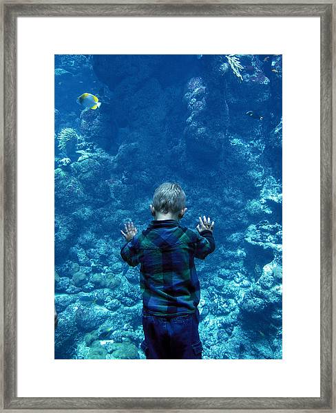 Looking Through The Glass Framed Print