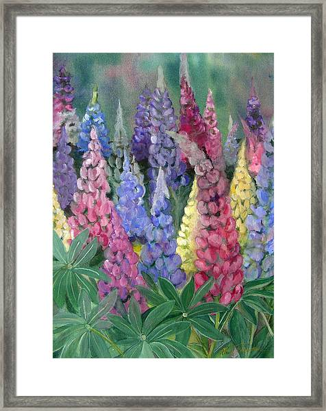Lupines Framed Print