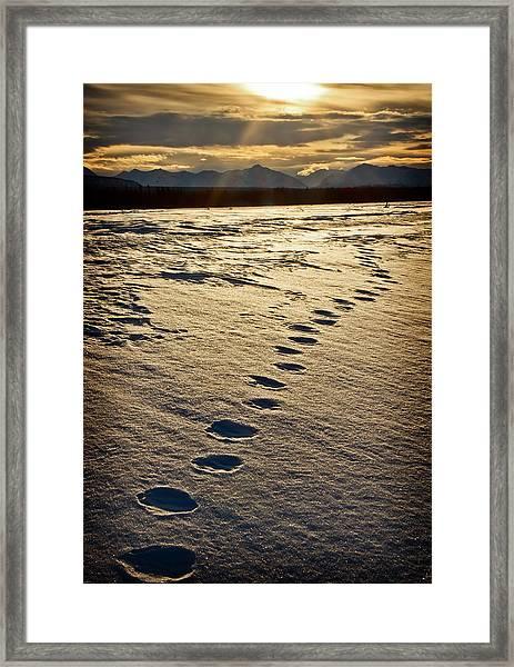 Lynx Tracks Framed Print