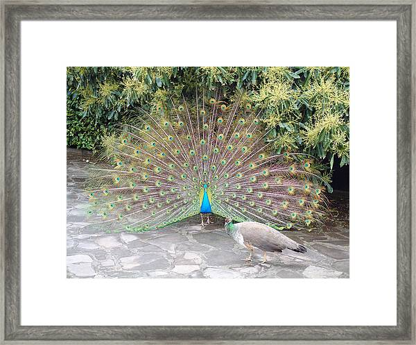 Madeira Island Beauty Framed Print