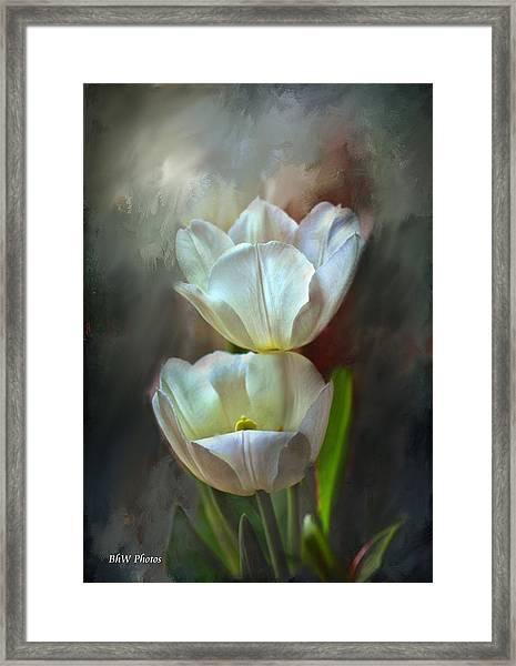 Majestic Tulips Framed Print