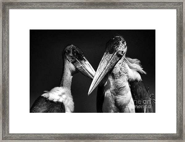 Marabou Stork Framed Print