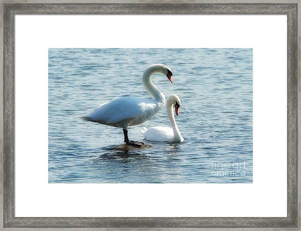 Mating Pair Framed Print