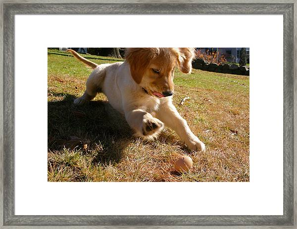 Maya And Her Egg  Framed Print
