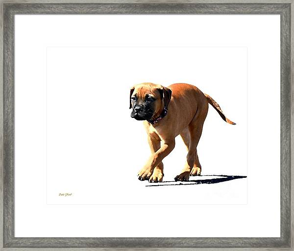 Me And My Shadow 5 Framed Print