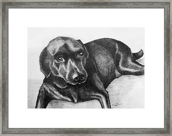 Meadow Framed Print by Sara Coolidge
