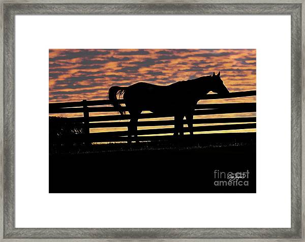 Memorial Day Weekend Sunset In Georgia - Horse - Artist Cris Hayes Framed Print