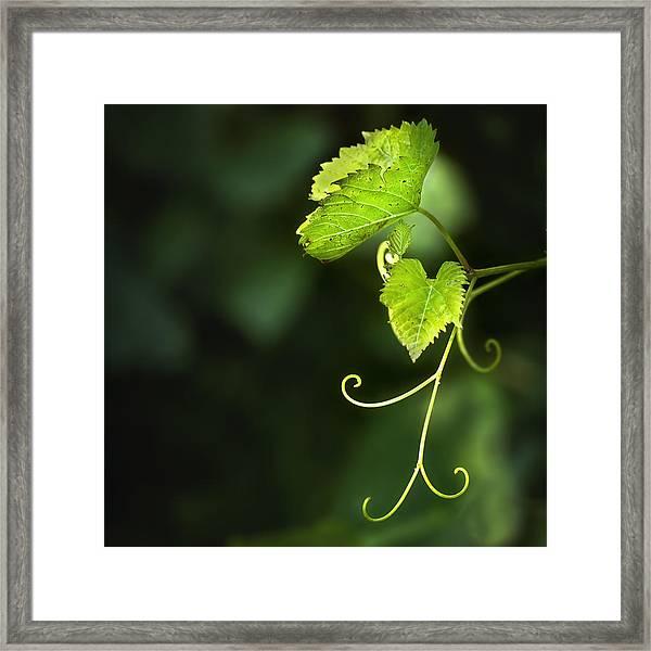 Memories Of Green Framed Print