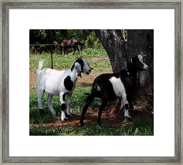 Mia And Andy Framed Print