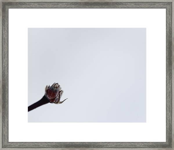 Midwinter Reflection Framed Print