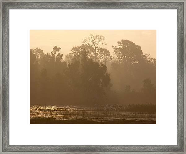 Misty Wetlands Framed Print