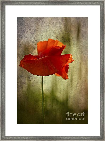Moody Poppy. Framed Print
