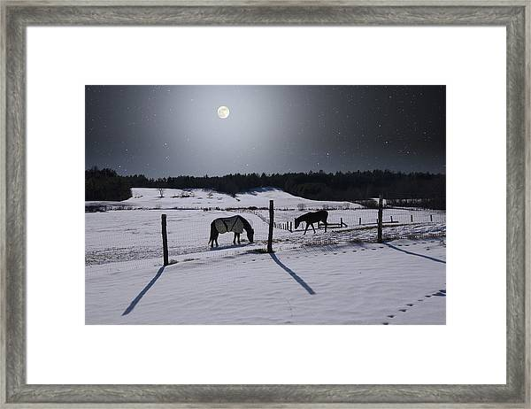 Moonlit Horses Framed Print