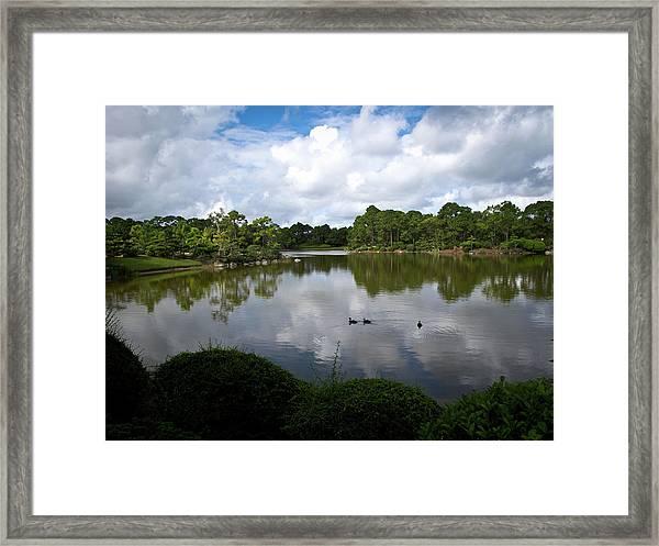 Morikami Ducks Framed Print