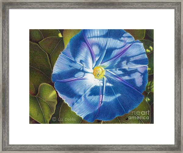 Morning Glory B Framed Print
