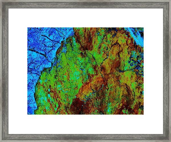 Moss On Rock Framed Print
