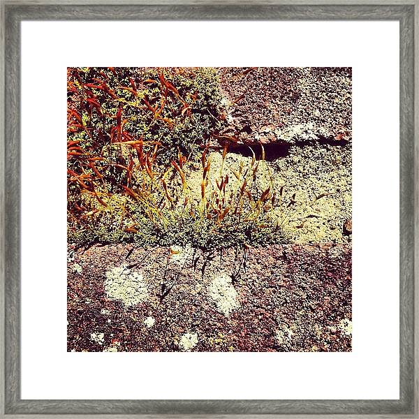 Moss Wall Abstract Framed Print